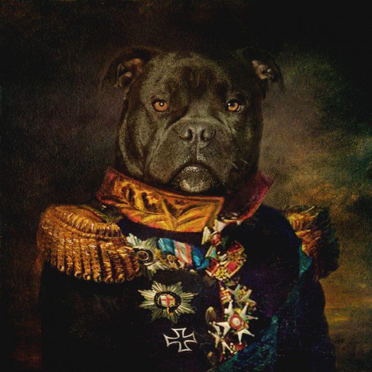 Perro-negro-Laura